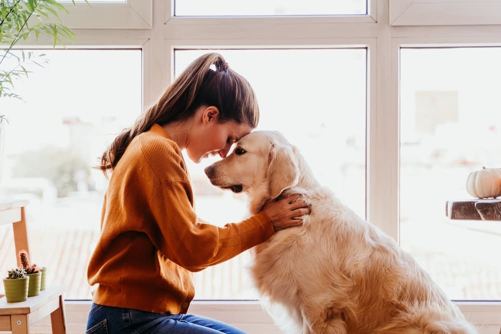 Can Animals Help With Mental Health and Recovery?